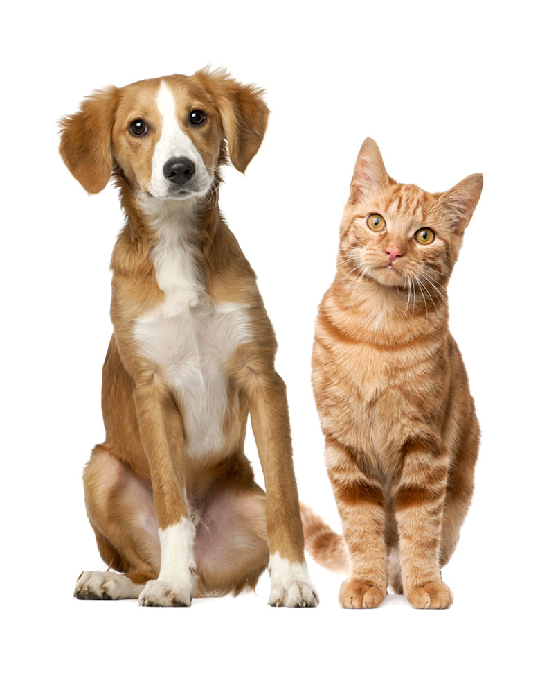 Image of a dog and a cat posing for the camera